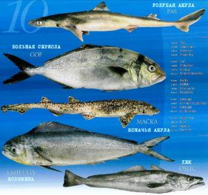 Средиземноморские рыбы и акулы