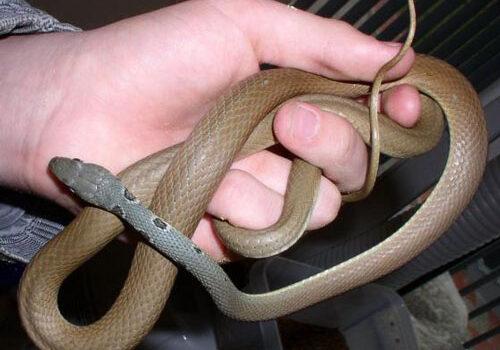 Черногория -опасные и неопасные змеи , их соседи и как выжить.