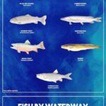 Рыбалка в Черногории - речная, озерная и правила лова